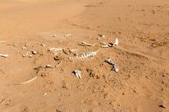 Bones of an animal in the desert Stock Images
