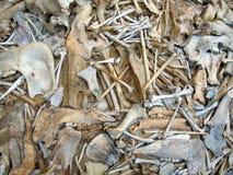 Bones background Stock Photo