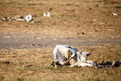 Bones - Chobe N.P. Botswana, Africa Stock Photo