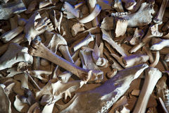 Bones Stock Image