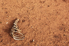 Bones on Cracked Red Earth Stock Image