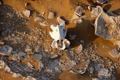 Bones in the desert. Sands rn Royalty Free Stock Images