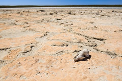 Bones in Desert Stock Images