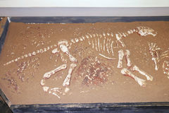 Bones of dinosaur in sand Stock Photography