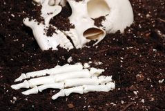 Bones in dirt focus hand. Skull and hand bones found in dirt royalty free stock photo