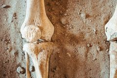 The bones of the human hand. Archaeological excavations and finds bones of a skeleton in a human burial , a detail of ancient research, prehistory stock photo