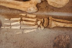 The bones of the human hand. Archaeological excavations and finds bones of a skeleton in a human burial , a detail of ancient research, prehistory royalty free stock images