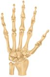 Bones of the human hand Royalty Free Stock Images