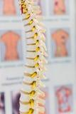 Bones layout Royalty Free Stock Photo