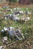 Bones of livestock on green grass Royalty Free Stock Photos