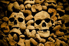 Bones Stock Photography