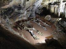 bones mammoth стоковые изображения rf