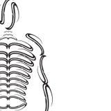 Bones man. Illustration of a human skeleton, black on white Royalty Free Stock Images