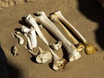 Bones in the sand. Human bones in the sand Stock Photography