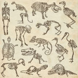 Bones and skulls of different animals - freehands Royalty Free Stock Photography