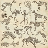 Bones and skulls of different animals - freehands Stock Images