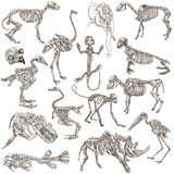 Bones and skulls of different animals - freehands Royalty Free Stock Images