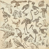 Bones, skulls and living birds - freehand drawings Royalty Free Stock Images