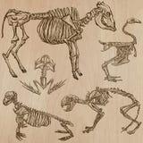 Bones, Skulls, Skeletons - freehands, vector Royalty Free Stock Photography