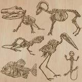 Bones, Skulls, Skeletons - freehands, vector Stock Photo
