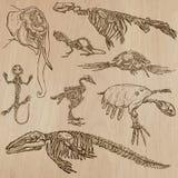 Bones, Skulls, Skeletons - freehands, vector Stock Photography