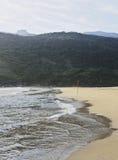 Bonete on Ilhabela Island, Brazil Stock Images
