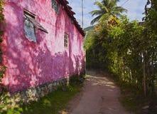 Bonete on Ilhabela Island, Brazil Stock Image