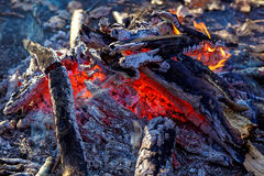 Bonfire in the autumn forest Stock Image