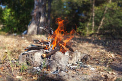 Bonfire in the autumn forest. Coals of fire Royalty Free Stock Photography