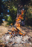 Bonfire in the autumn forest. Coals of fire Stock Photos