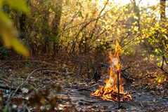 Bonfire in the autumn forest Royalty Free Stock Photos