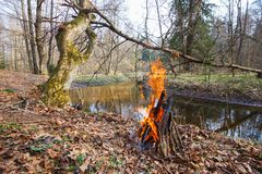 Bonfire on the bank of a forest river under an oak tree royalty free stock images