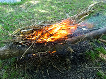 A bonfire of brushwood in a clearing Royalty Free Stock Photo
