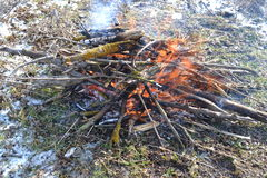 Bonfire. Burning fire of twigs and sticks Royalty Free Stock Photo