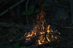 Bonfire in the forest Royalty Free Stock Photos