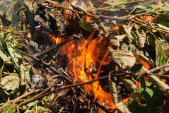 Bonfire. Burning leaves and sticks in a bonfire royalty free stock photography