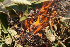 Bonfire. Burning leaves and sticks in a bonfire royalty free stock images