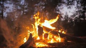 Bonfire burn red night black forest wild danger smoke