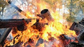 Bonfire burns in the forest in the autumn, sticks in the fire close up, slow motion stock video