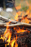 Bonfire campfire fire Flames grilling steak on the BBQ Royalty Free Stock Photography