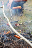 Bonfire campfire fire Flames sausage on the BBQ Royalty Free Stock Photography