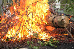 Bonfire campfire fire summer forest Royalty Free Stock Images