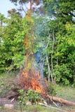 Bonfire campfire fire summer forest royalty free stock photos