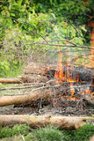Bonfire campfire fire summer forest Royalty Free Stock Photos