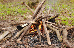 A bonfire in the center of the forest.  Fire and tree. A fire made of wood in early spring, in the center of the forest.  A beautiful fire Royalty Free Stock Images