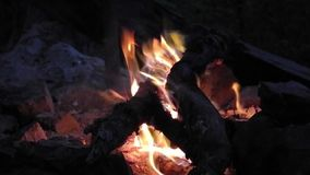 Bonfire close up stock video