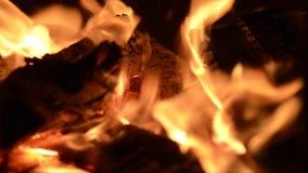 Bonfire closeup flame stock video