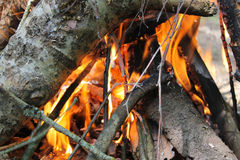 Bonfire closeup in the forest . Royalty Free Stock Photo