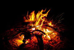 Bonfire. Coals burning fire in the night background Royalty Free Stock Image