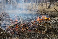 Bonfire during day before Walpurgis Night, 30 of april,  Sweden. Birch trees, spring Stock Photography